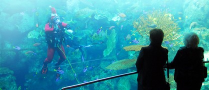 Exhibiciones y Actividades del «Aquarium of the Pacific»