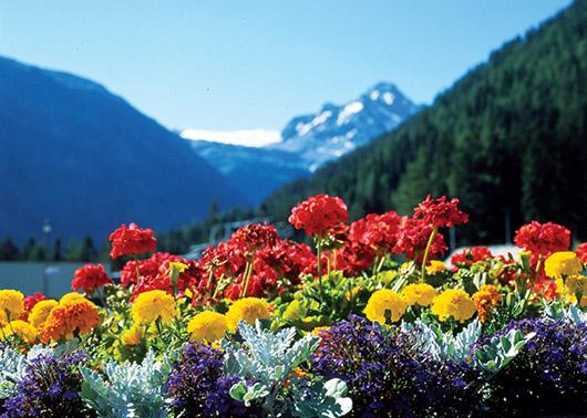 la primavera idee giardino fresco : El inicio de la Primavera Miniondas Newspaper y FarandulaUSA ...