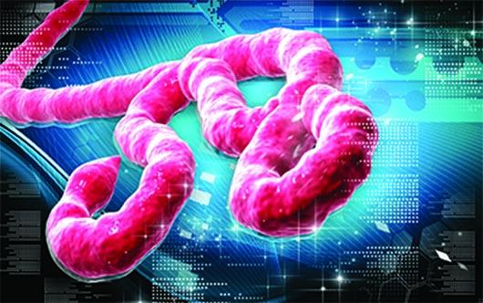 El Ebola ¿qué es, cómo se reconoce?