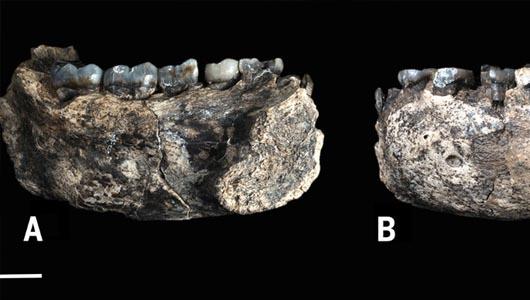 Encuentran el fósil de mandíbula más antiguo que se conoce del género humano