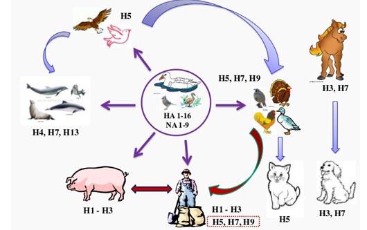 Virus H5 en los Estados Unidos