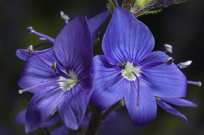 Que Flores Regalar En San Valentin El Significado De Las Flores