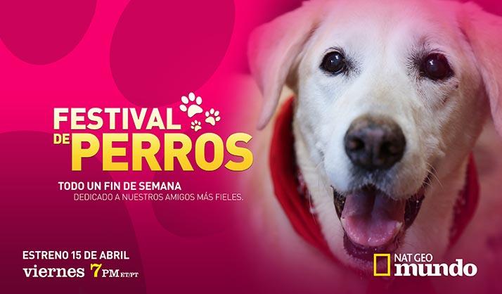 Nat Geo Mundo estrena el «Festival de Perros» el mejor amigo del hombre