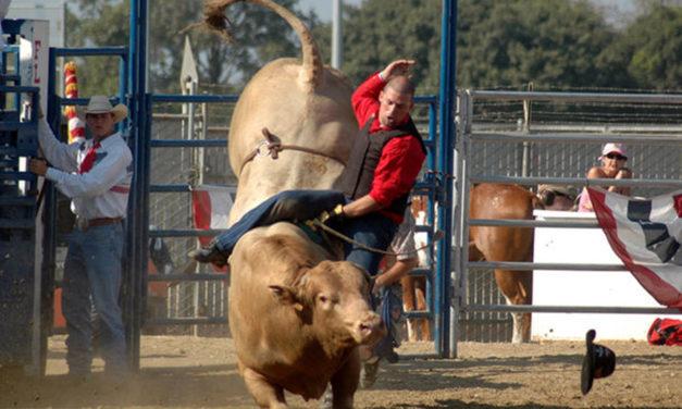 La emoción de Broncs & Bulls en la feria de Orange