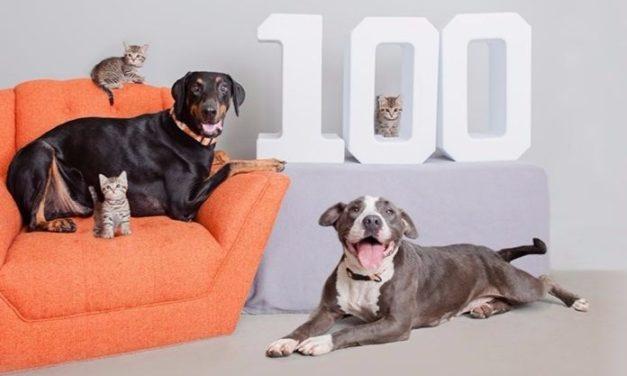 El #Holiday100 de Best Friends Animal Society  Trae Un Giro Inesperado al Fin de Semana 'Black Friday'