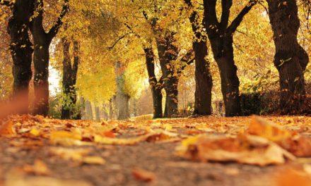 Embellecimiento a Nuestra Comunidad – Temporada de Caída de Hojas de Árbol en Santa Ana