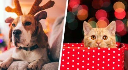 Proteja a sus perros y gatos de los peligros de las fiestas decembrinas