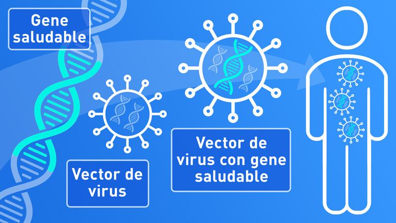 ¿Qué es la terapia genética? ¿Cómo funciona?