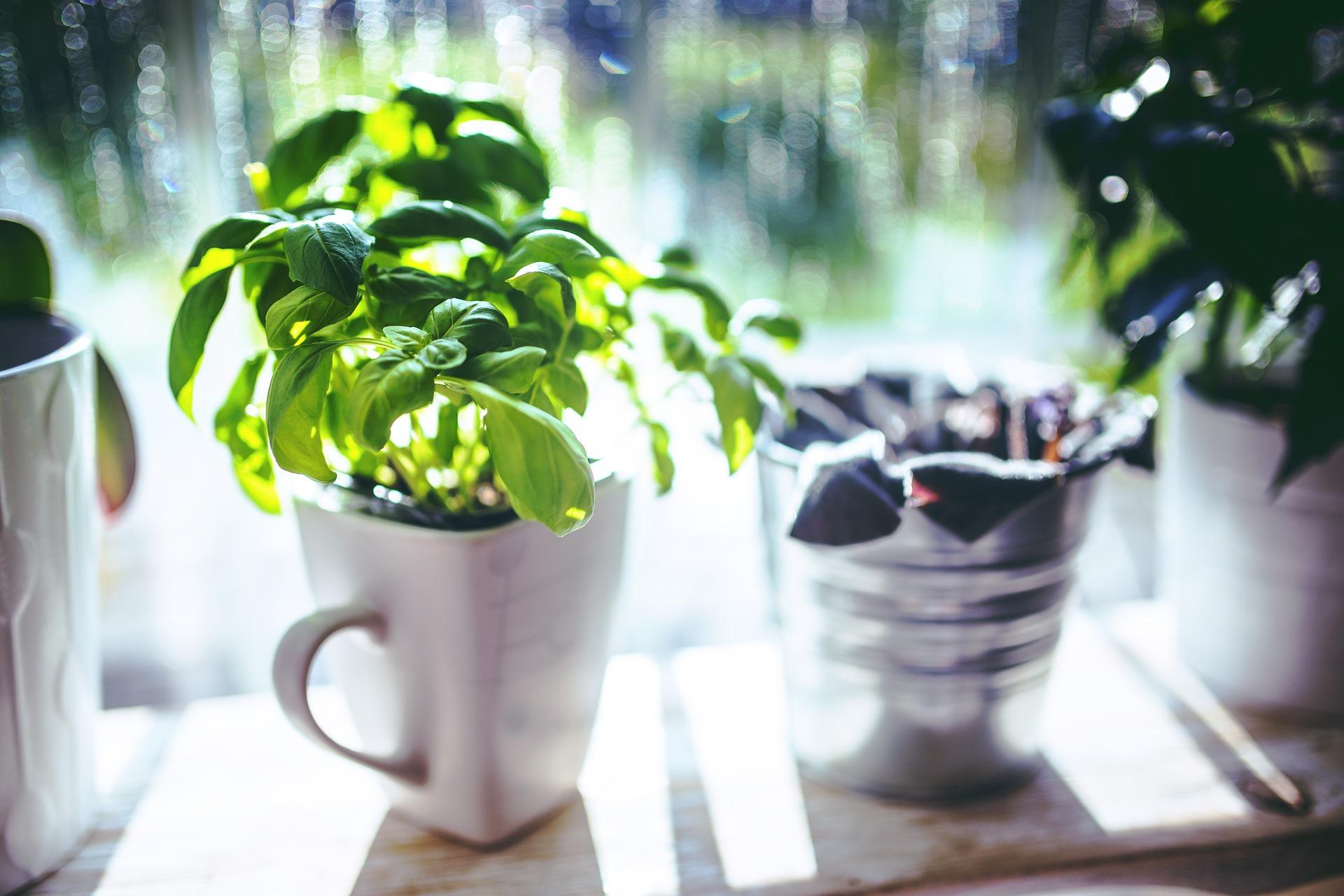 Las plantas: ¿nuestras socias en la salud?