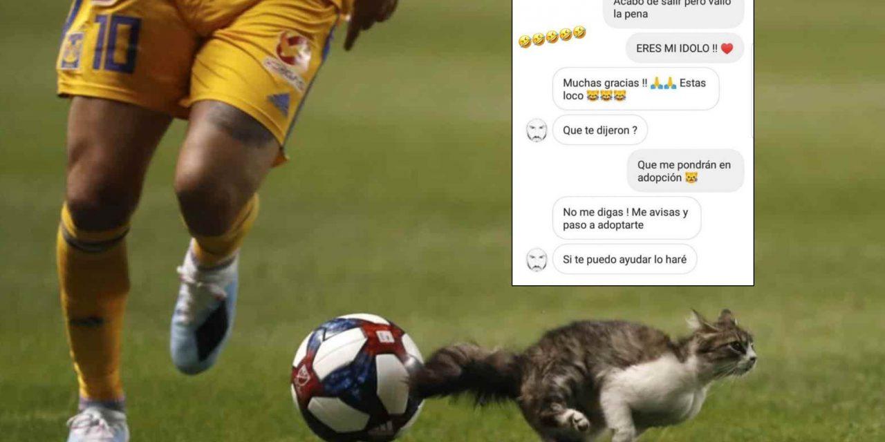 Gignac «conversa» con gatito, piensa en adoptarlo