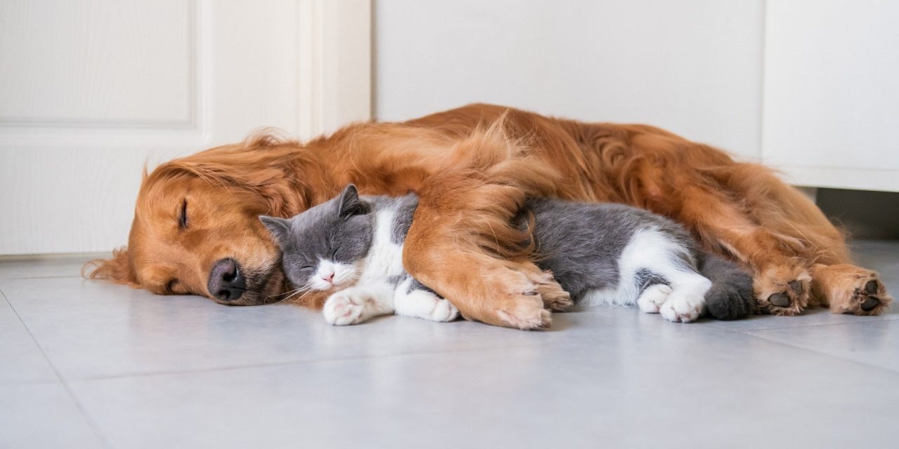 Mascotas, la nueva cara de la esperanza