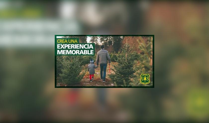 Permisos para árbol de Navidad disponibles en línea