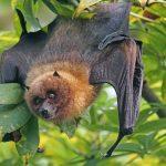 Un murciélago encontrado en Laguna Niguel da positivo en la prueba de la rabia